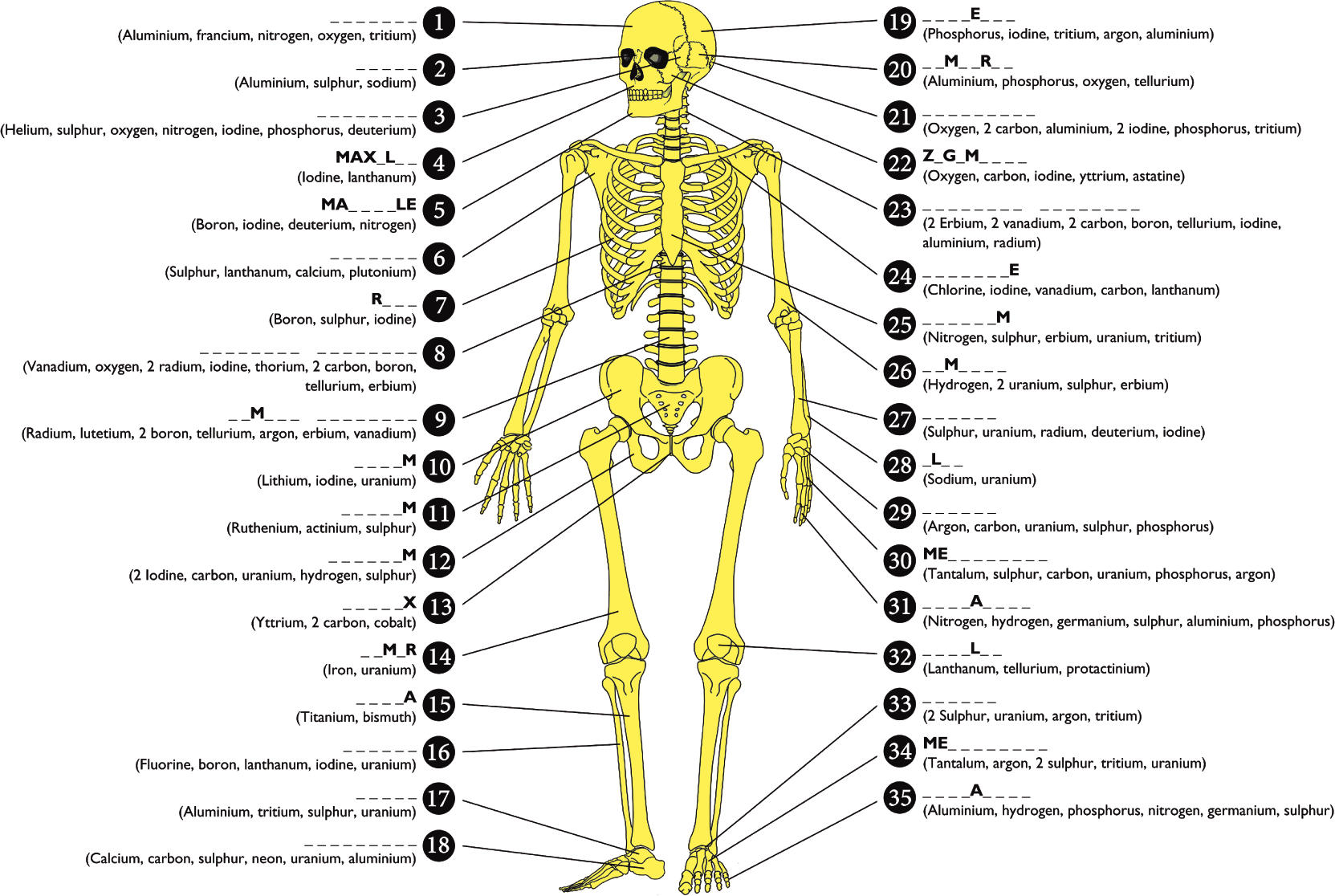 Images Of All 206 Bones Of The Body Spacehero
